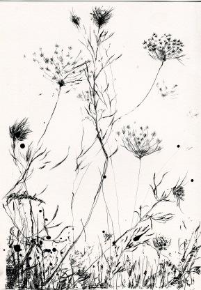 Botanical studio 3, ink on paper