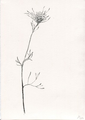 Botanical studio 4, ink on paper