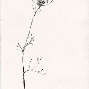 Botanical studio 4, ink on paper