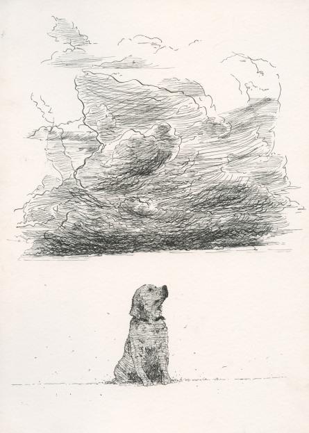 F.Poiana-burrascare dog
